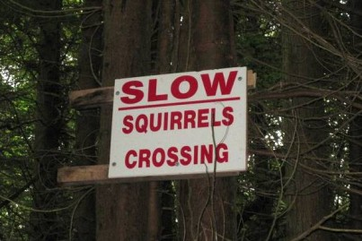 Slow Squirrels